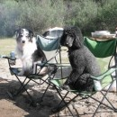 Dogs Love Rafting…