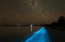 Exploring Bioluminescence on Tomales Bay