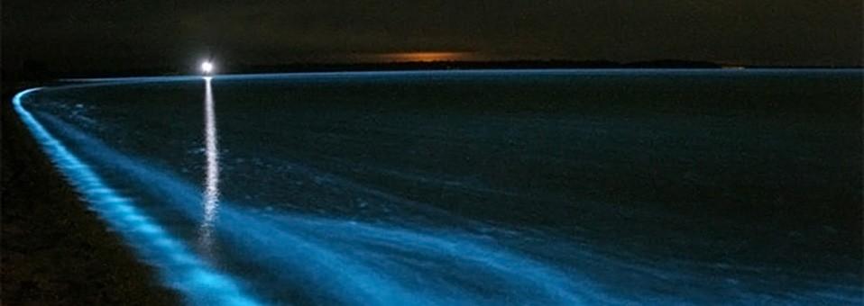 Bioluminescence Tours