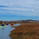 Petaluma Marsh Tour – 10/25