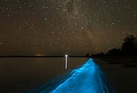 Bioluminescence Evening Kayak Tours!