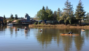 Clavey Paddlesports SUP Yoga on the Petaluma River - Photo by Anne Kellogg