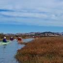 Petaluma Marsh Kayak Tour